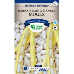 Haricot nain à écosser Mogex