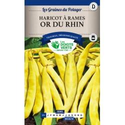 Haricot à rames or du Rhin