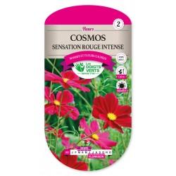 Cosmos sensation rouge intense